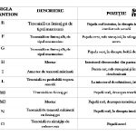 file1-restaurare-troita-slide11