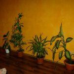 sanmarco-piatra-neamt-decoratiuni-interioare-1188